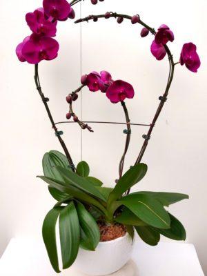 Orchidée 4 branche travaillée