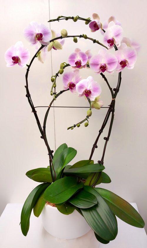 Orchidée rose pâle 4 tiges