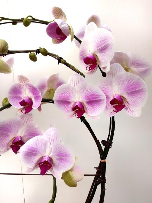 Orchidée rose pâle 4 branches travaillées avec sont pot.
