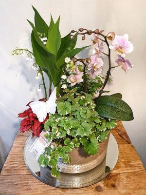 Jardin élégant muguet et plante verte A Nos Racines