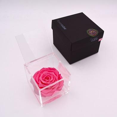 rose éternelle rose 10x10