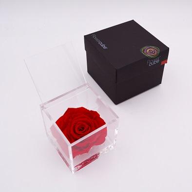 rose-eternelle-rouge-10x10